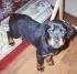 Maximus Puppy
